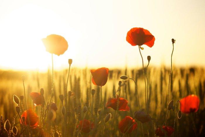 Un país de sol y luz. Artículo de opinión de Juan José Mairal Herreros