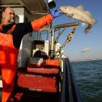 Þúsundum tonna fiski er hent á hverju ári vegna kvótakerfisins.