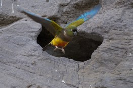 el_condor_perroquet5