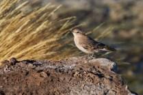 Laguna_Santa_oiseaux 7