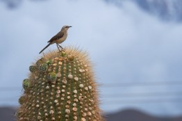 Parc_National_Los_Cardones 10