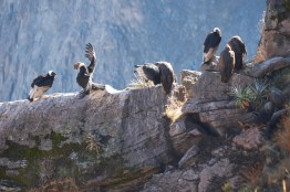 La parade des condors