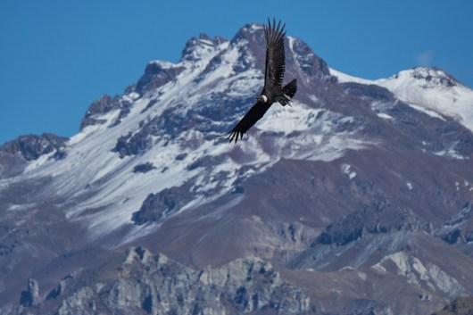 Vol près des sommets