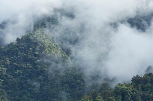 Fôret de nuage à Mindo