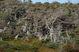 Forêt à Terre-Neuve