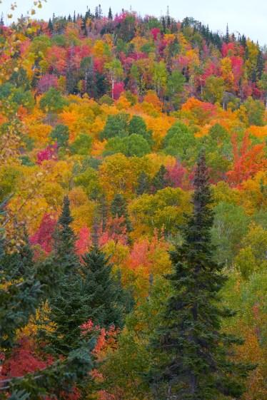 Couleur d'automne au nord de Québec