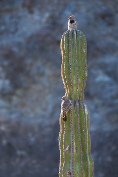 Pic sur Cactus