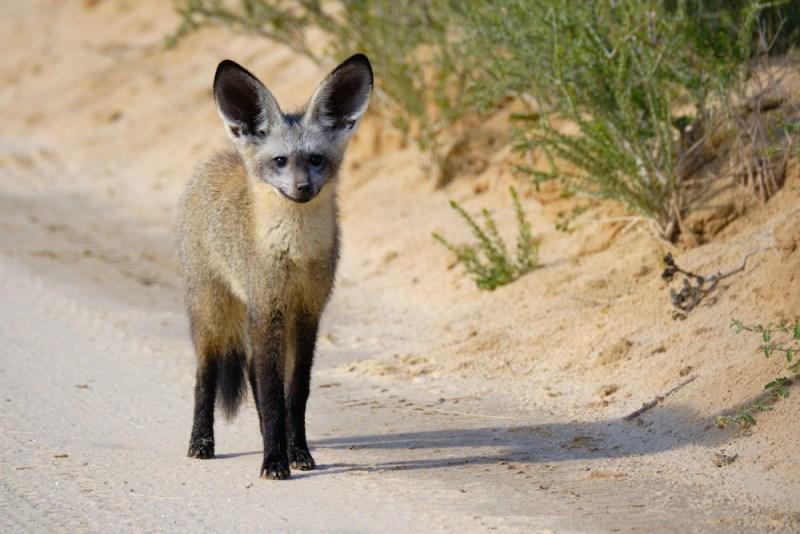 De Swakopmund, en Namibie, au Kalahari, en Afrique du Sud