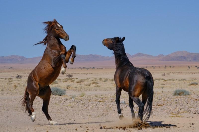 Du parc Kruger en Afrique du Sud à Swakopmund en Namibie