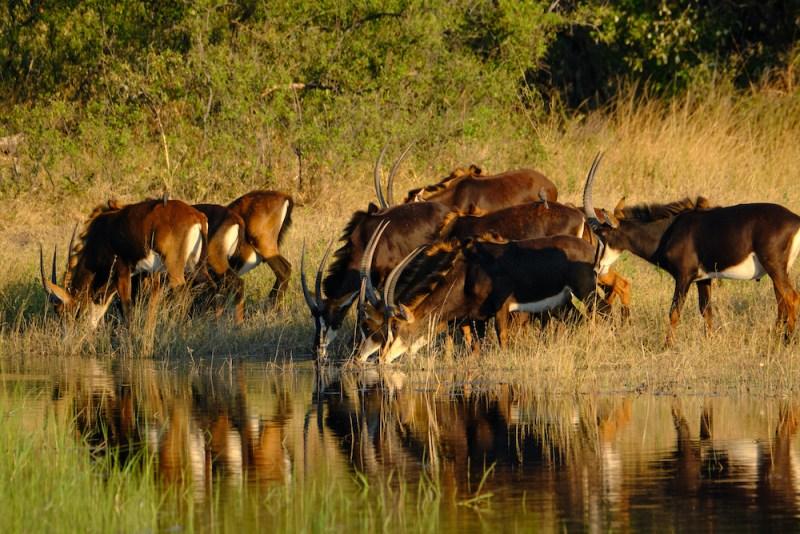 De la Bande de Caprivi en Namibie à la traversée de la Zambie