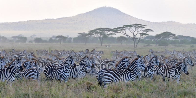 De Gombe Stream au Ngorongoro et Serengeti en Tanzanie