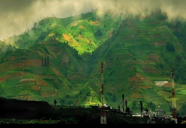 Rice terrace on Dieng Plateau