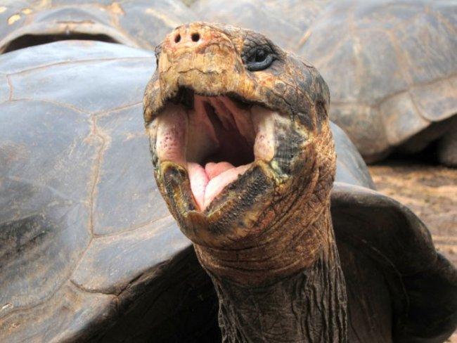 Land tortoise, Galapagos, Ecuador