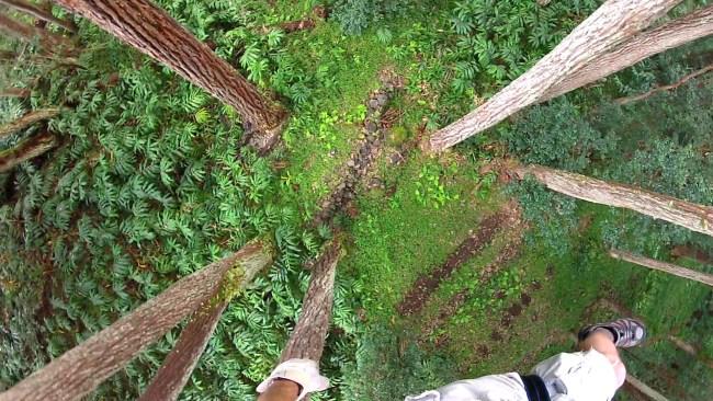 Ziplining view at Kohala zipline