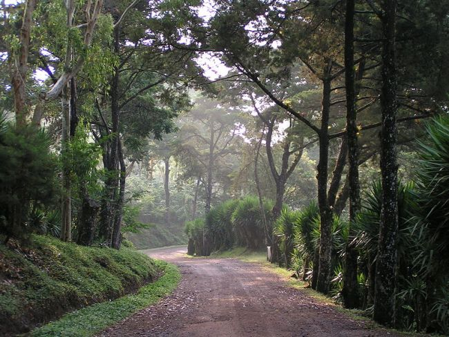 selva-negra-entrance