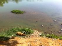 Spotting a capybara by the lake