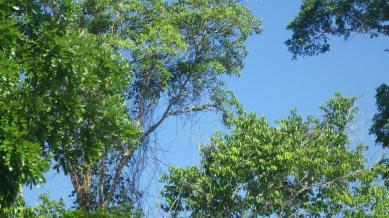 Spot the camouflaged iguana