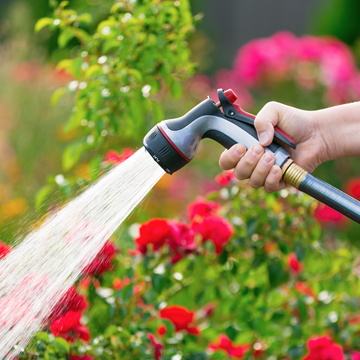 watering plants with hose