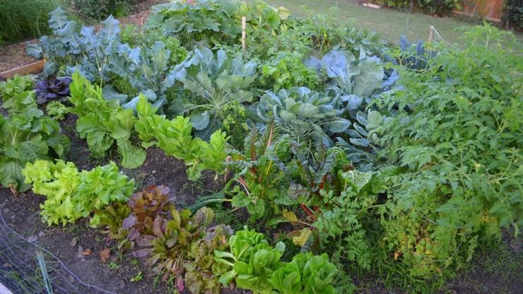 Fall Garden Installation