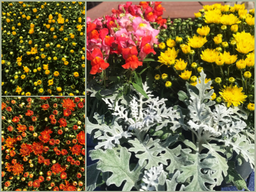 fall annuals for Fall Decorating Ideas