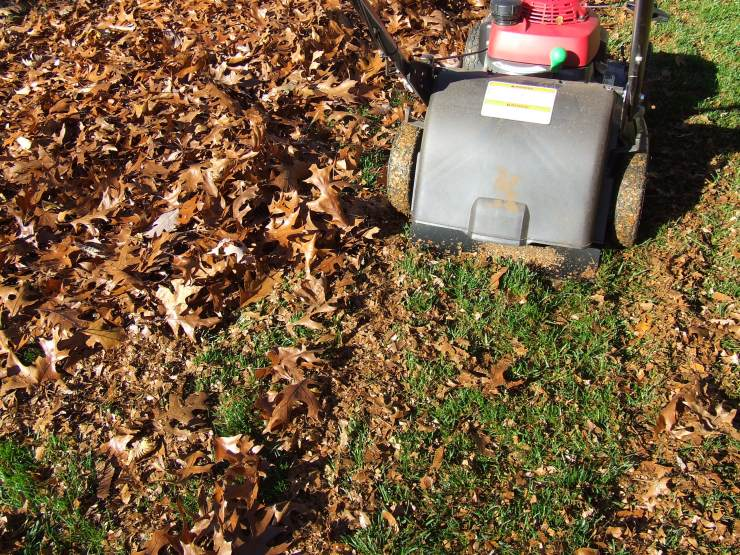 Shred leaves for lawns