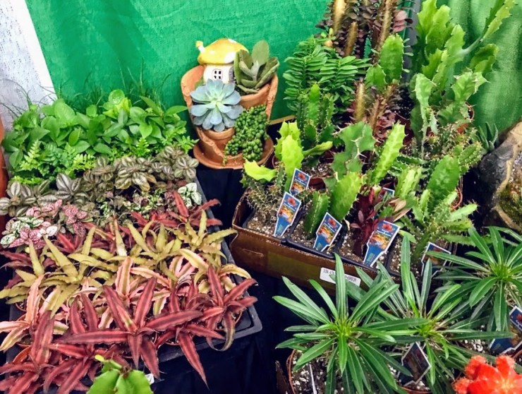succulents, cacti, tropical foliage