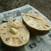 Photo of Jackfruit opened