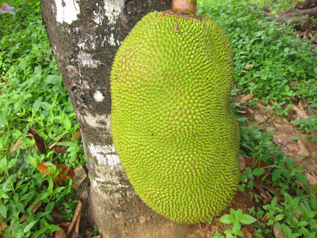 Photo of Jackfruit ചക്ക