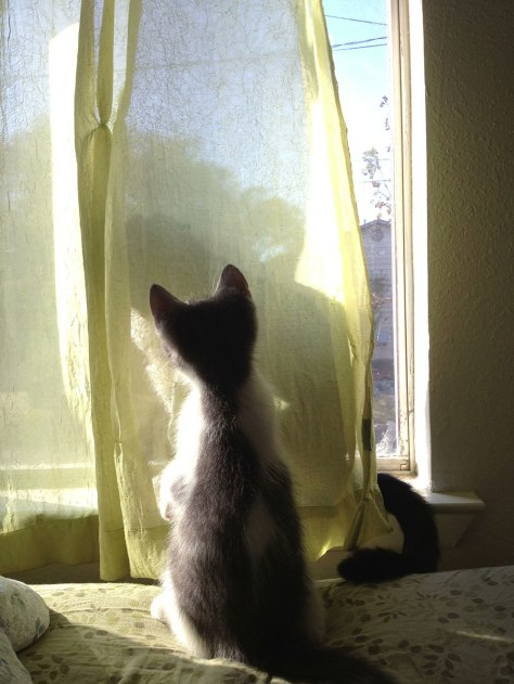 Is that a cat behind that curtain?