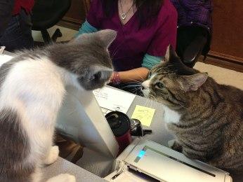 Meeting Donny the vet office cat