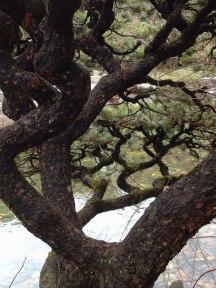 chinese-gardens12