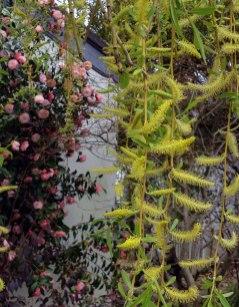 chinese-gardens14