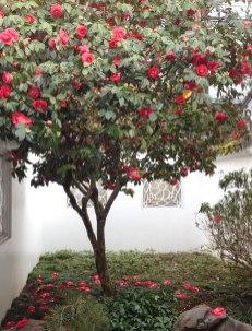 chinese-gardens27
