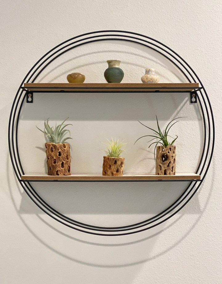 Plants in Home Staging Air Plants