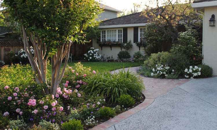Some Of My Favorite Plants For So Cal Gardens  Jackie