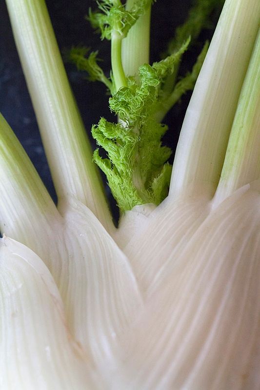 fennel bulb photo by Jackie Alpers