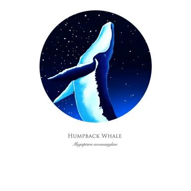 humpbackprint