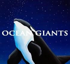 Orca at night - Phone Wallpaper copy