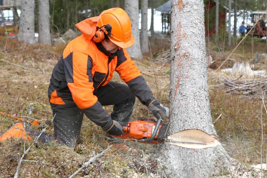 Emergency Tree Removal Toronto