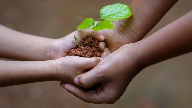 Fertilization & Soil Management