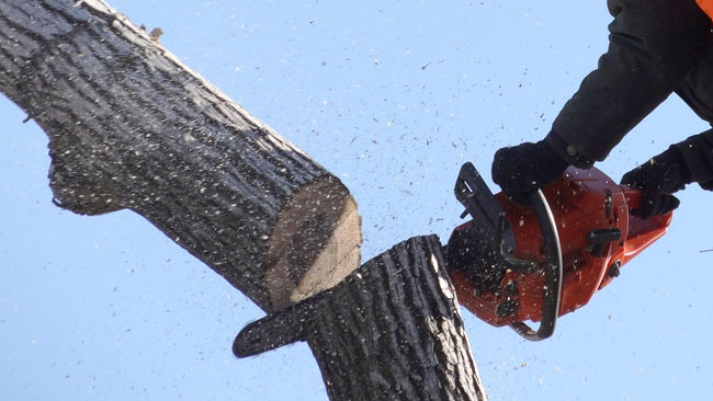 Professional Tree Services Toronto