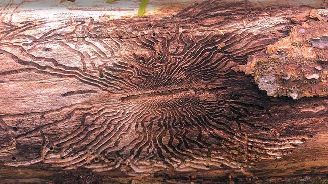 Tree Shrub Removal