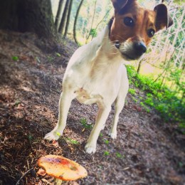 mushroom picking in the woods