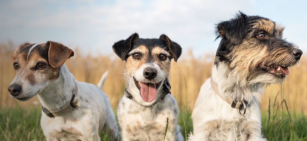 dogs and the enneagram personaliy types
