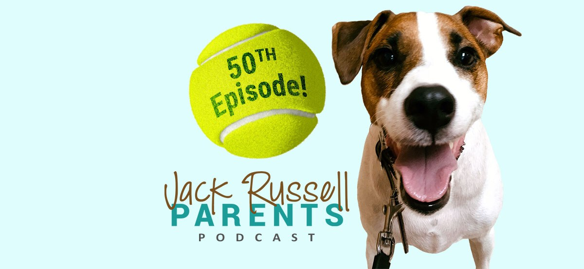 50th episode special - jack russell parents podcast