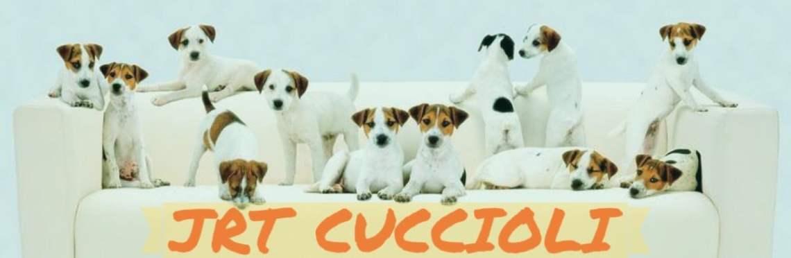 1-4 JRT Cuccioli