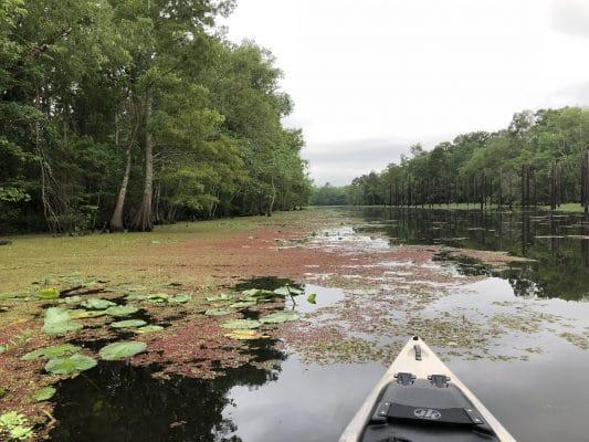 Exploring the Maurepas Swamp