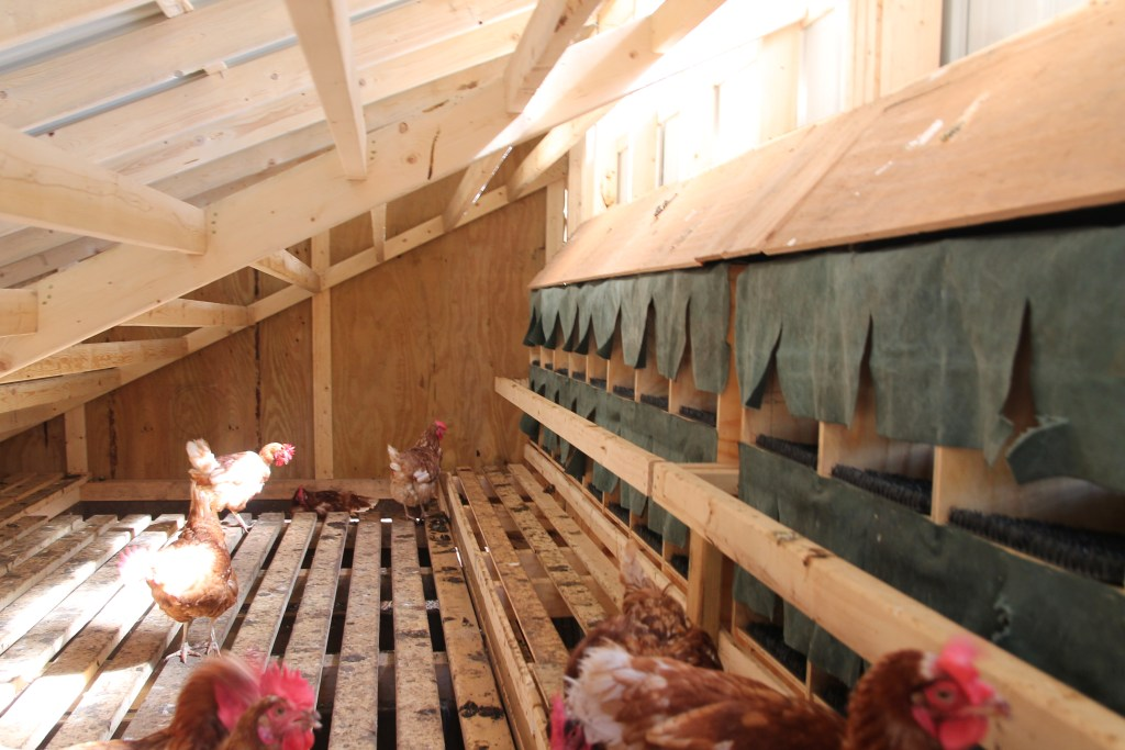 clean modern interior egg layers nesting box chicken coop