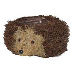 Brushwood Hedgehog with Plant Area