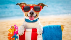 READY FOR SUMMER!? GRAB YOUR TANNING LOTION AND JUMP INTO A GAME OF SUMMERTIME TRIVIA